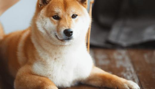 柴犬グッズが人気の通販サイトや実店舗15選!かわいいものに囲まれて癒されよう