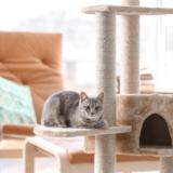 おしゃれな猫部屋を作りたい!猫が快適に過ごせる部屋作りを解説