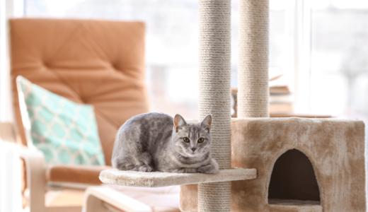 猫部屋をおしゃれに作りたい!快適に過ごせる空間作りを徹底解説