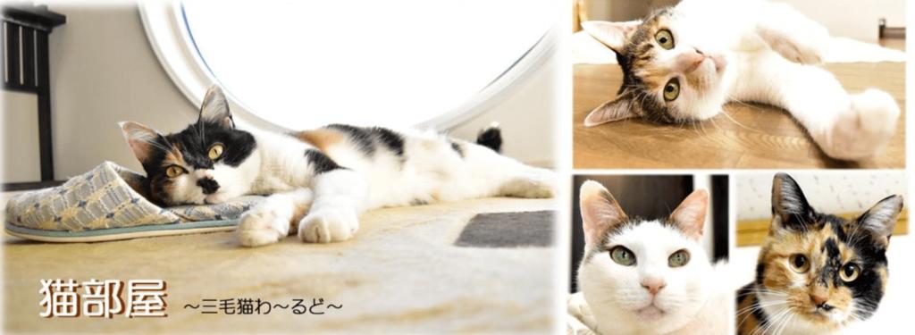 猫部屋をおしゃれに作りたい!猫が快適に過ごせる空間作りを徹底解説