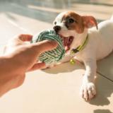 愛犬に手作りおもちゃをプレゼントしよう!作る際のポイントとアイディアを紹介