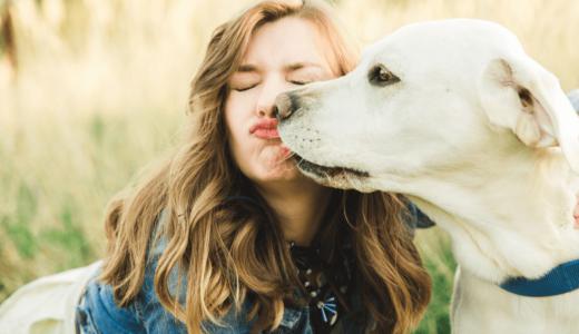 犬が舐めるのは愛情表現だけじゃない?場所で分かる伝えたい心情とは