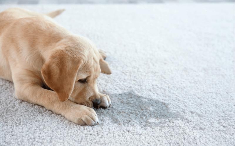犬が舐めるのは愛情表現だけじゃない?舐める場所で分かる犬の気持ちを知ろう!