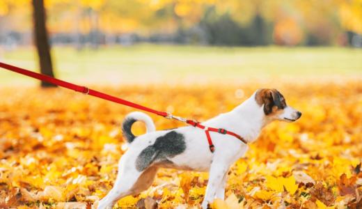 犬が散歩中に引っ張るのはなぜ?考えられる3つの理由と改善に役立つおすすめ商品3選!