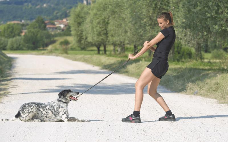 散歩中に犬が引っ張るのはなぜ?その原因と改善法を紹介
