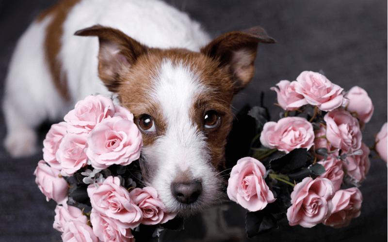 愛犬の名前はどう決める?命名するときのポイントや人気の名前を大公開!