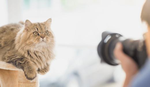 ペット撮影可能なスタジオで思い出作りをしよう!全国にある店舗10選をご紹介