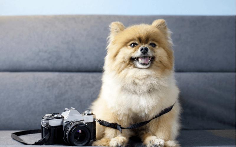 ペットの可愛い姿を写真に残そう!全国各地にあるおすすめのスタジオを紹介