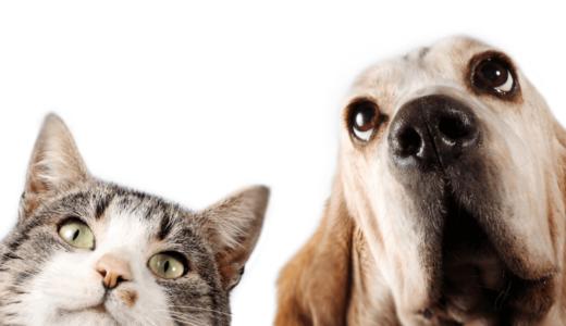 猫派が上回った?!近年のペット事情がわかる「Fromプラネット第94号」の調査結果!
