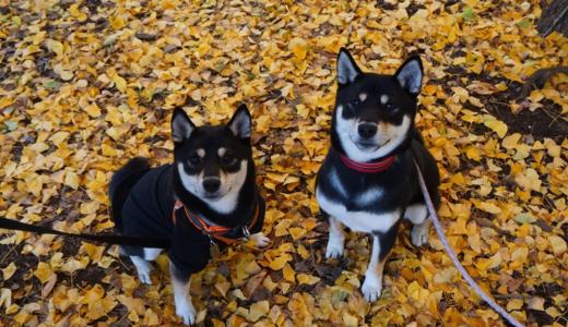 犬の兄弟探しは血統書から!?おすすめアプリや実際に再会を果たした「ひじきちゃん&くぅちゃん姉妹」を紹介