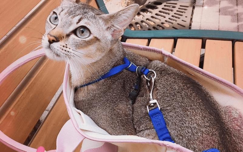 猫用のリードを活用しよう