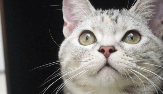 猫がかわいいのには理由があった!おすすめ画像・動画16選で癒されてみては?