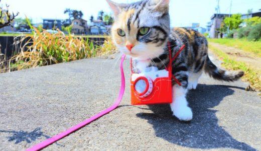 猫のリードは活用術を身につけると役立つ!?その選び方とおすすめ商品4選