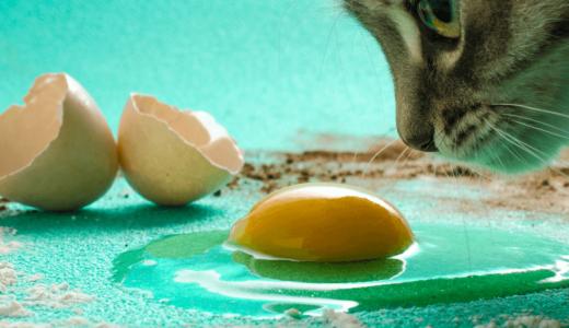 猫に生卵は大丈夫?与えるときの5つの注意点とは