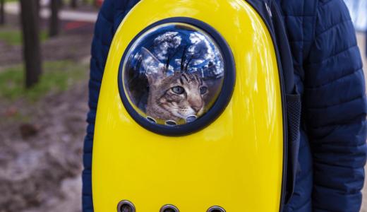 猫とのお出かけはキャリーリュックを使おう!人気ランキングベスト5とおすすめ商品3選