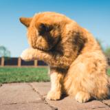猫だって夏バテする!症状に早く気づいて適切な対策を