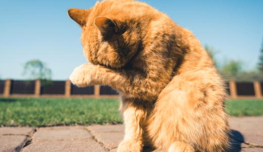 猫だって夏バテする!適切な6つの対策法で健康な身体を維持しよう