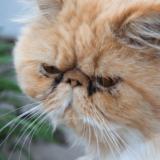 猫の涙やけ