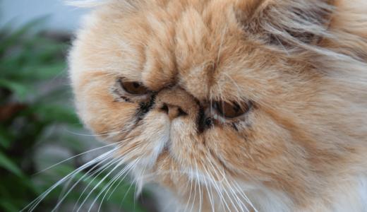猫が涙やけしてしまう3つの原因とは?3つのケア方法とおすすめ商品3選