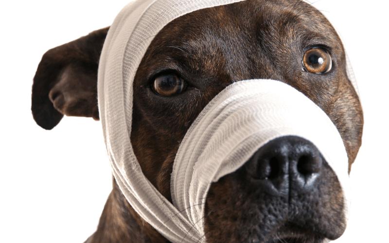 顎をケガした犬