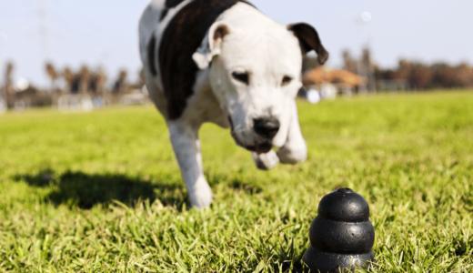 犬のおもちゃコングが人気!上手な使い方とおすすめ商品3選