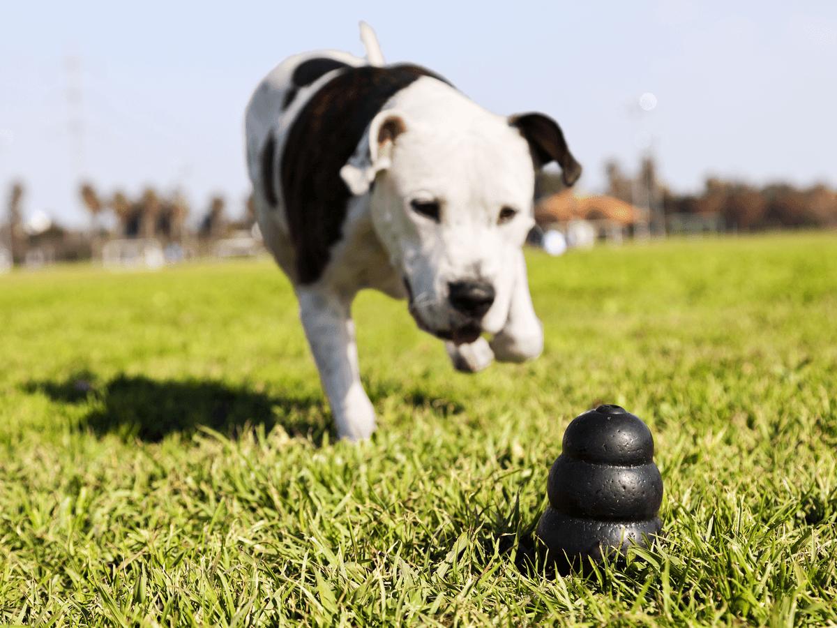 犬のおもちゃに人気のコング、どんな商品かを徹底解説!上手な使い方も教えます。