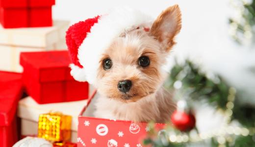 愛犬へのクリスマスプレゼントは何がおすすめ?人気商品19選をチェック!