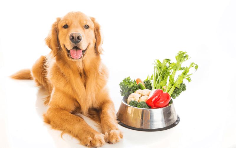 栄養バランスの取れた犬の食事