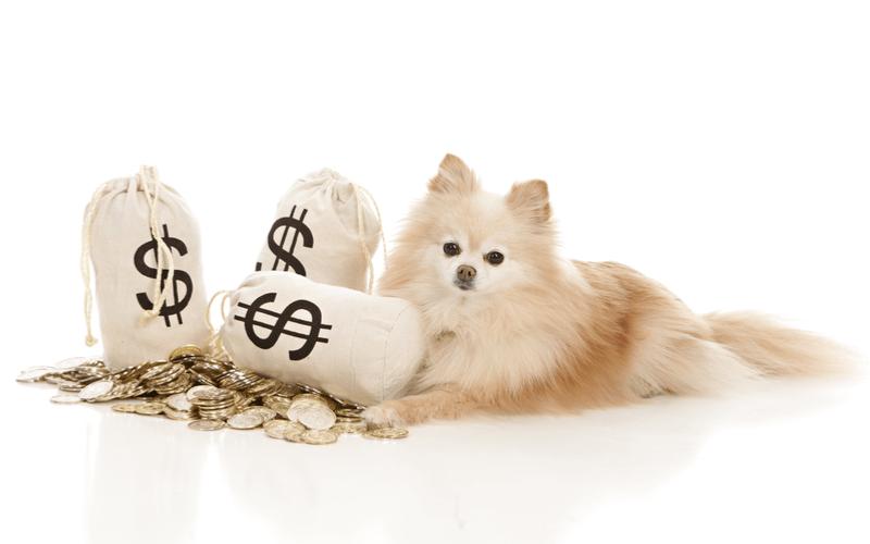 犬にかかる費用