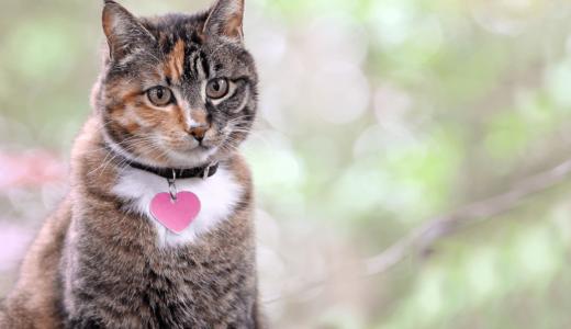 猫の名前で人気なのは何?性別や特徴などこだわりから決めてみよう!