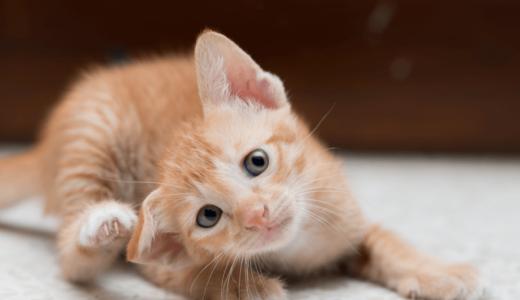 猫にノミがつく5つの症状と原因は?薬を使用する駆除方法や予防策