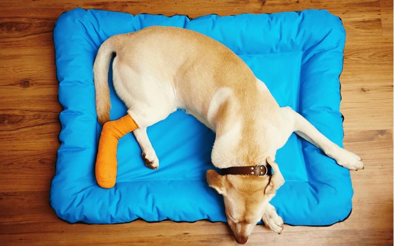 足首を負傷した犬