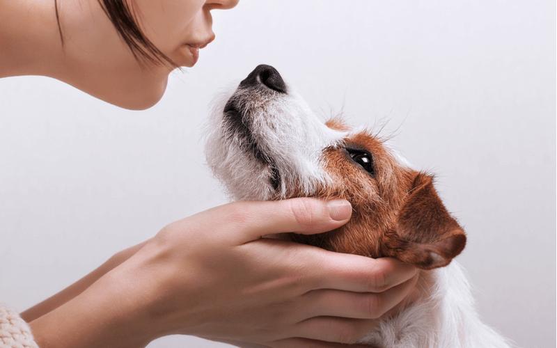 犬の甘え鳴きが「可愛い」を通り越してうるさい!そんなときにできる対処法