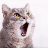 猫の口臭が気になる!原因と対策法は?