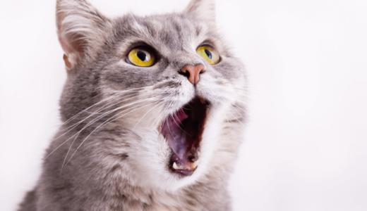 猫の口臭対策に効果が期待できる5つ方法とは?健康チェックのためにもその原因を探ろう