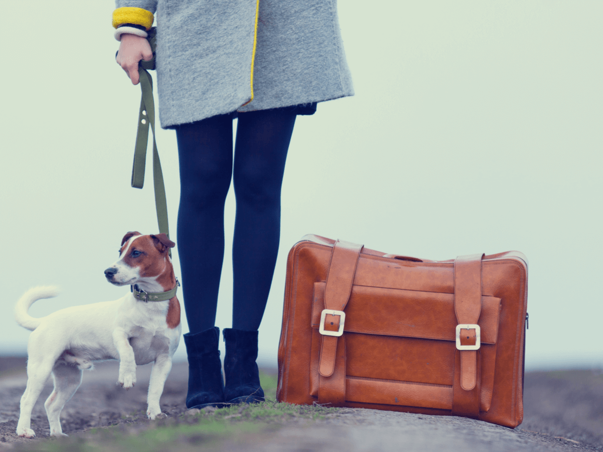 愛犬と旅行へ
