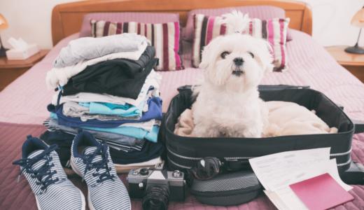 ペットとの海外旅行に持っていくべきグッズ14選!必要な手続きや代行会社の費用も