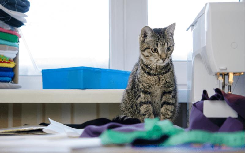 愛猫におしゃれな首輪をつけてあげたい!安全なアイテムを簡単に作る方法
