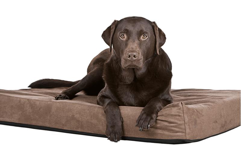 犬におすすめのベッドは?タイプや使い勝手に注目して選ぼう!