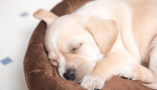 犬におすすめのベッド5選!タイプ別でみる4つのポイントを把握して合ったものを選ぼう