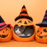 ハロウィン 猫