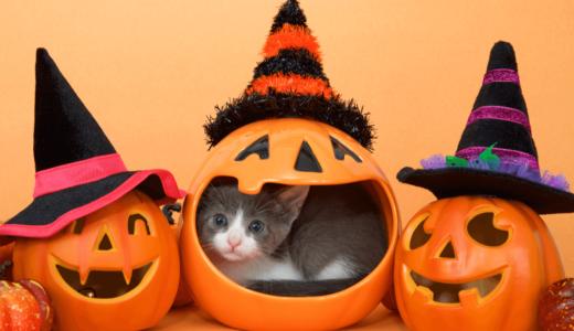 猫とハロウィンを楽しむためのおすすめ商品13選!今年は一緒に仮装しよう!
