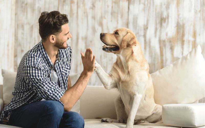 犬と飼い主の絆