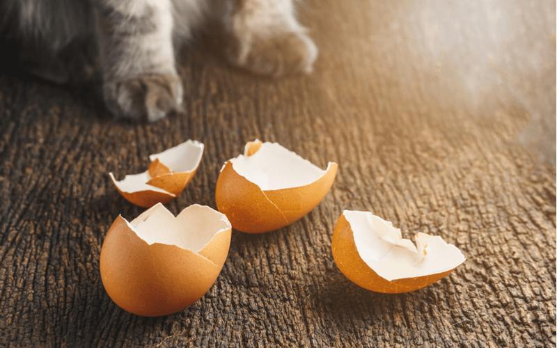猫と卵の殻