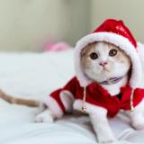 猫のクリスマスコスチューム
