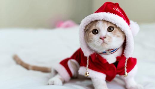 愛猫にクリスマスの服をプレゼントしよう!おすすめの衣装4選と上手な写真の撮り方をご紹介