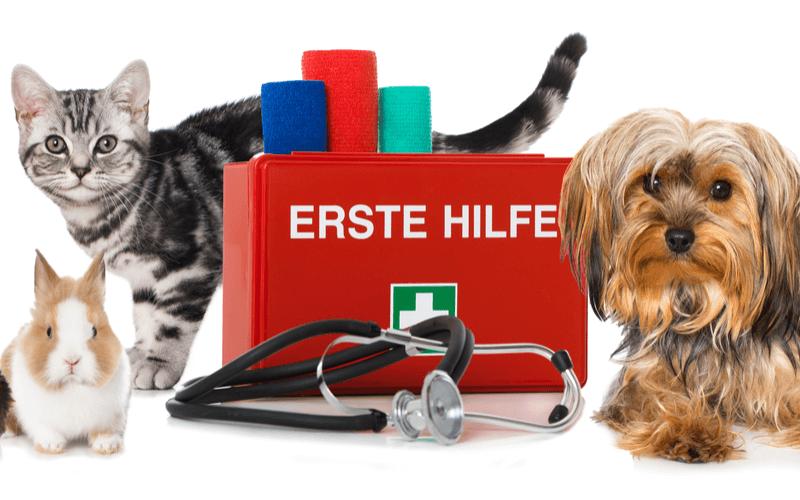 ペットの動物病院