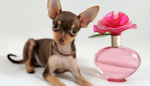 犬は香水が嫌いな理由とそのニオイ種類とは?おしゃれに使えるおすすめ商品5選も合わせてチェック!