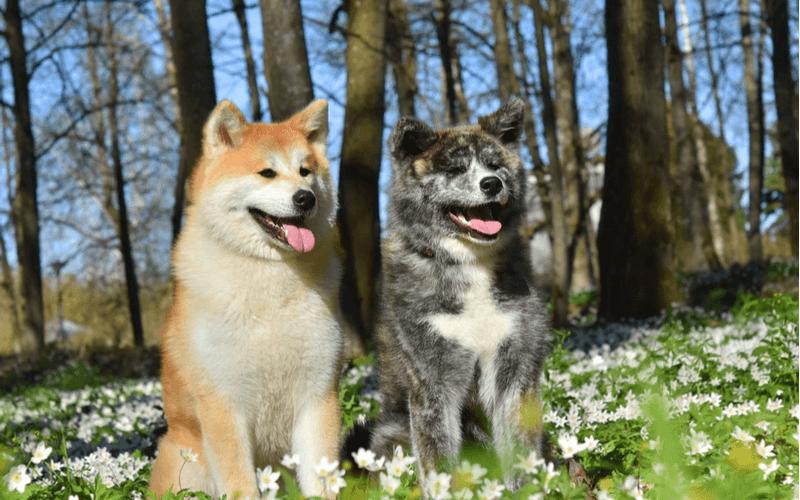 犬にも相性がある?!犬同士の相性の見分け方や「ポペットファミリー・ジュイくん」をご紹介