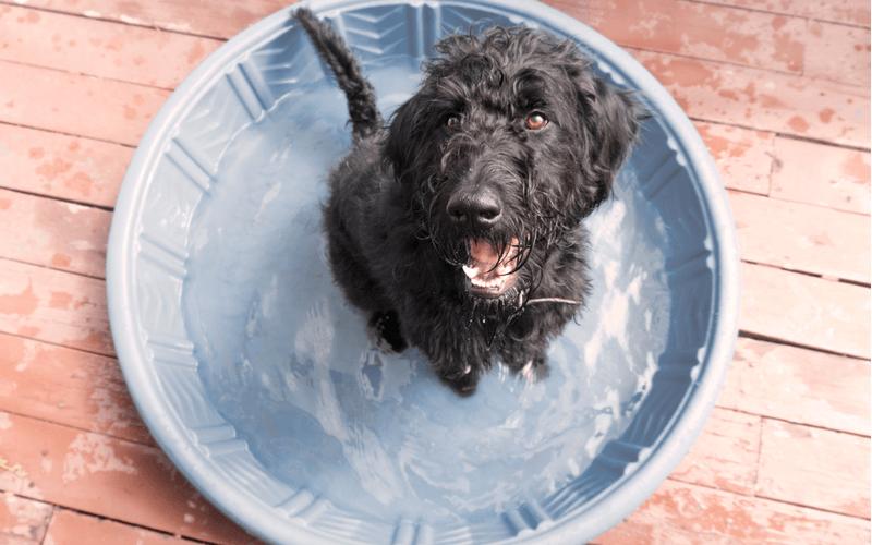 水浴びを楽しむ犬